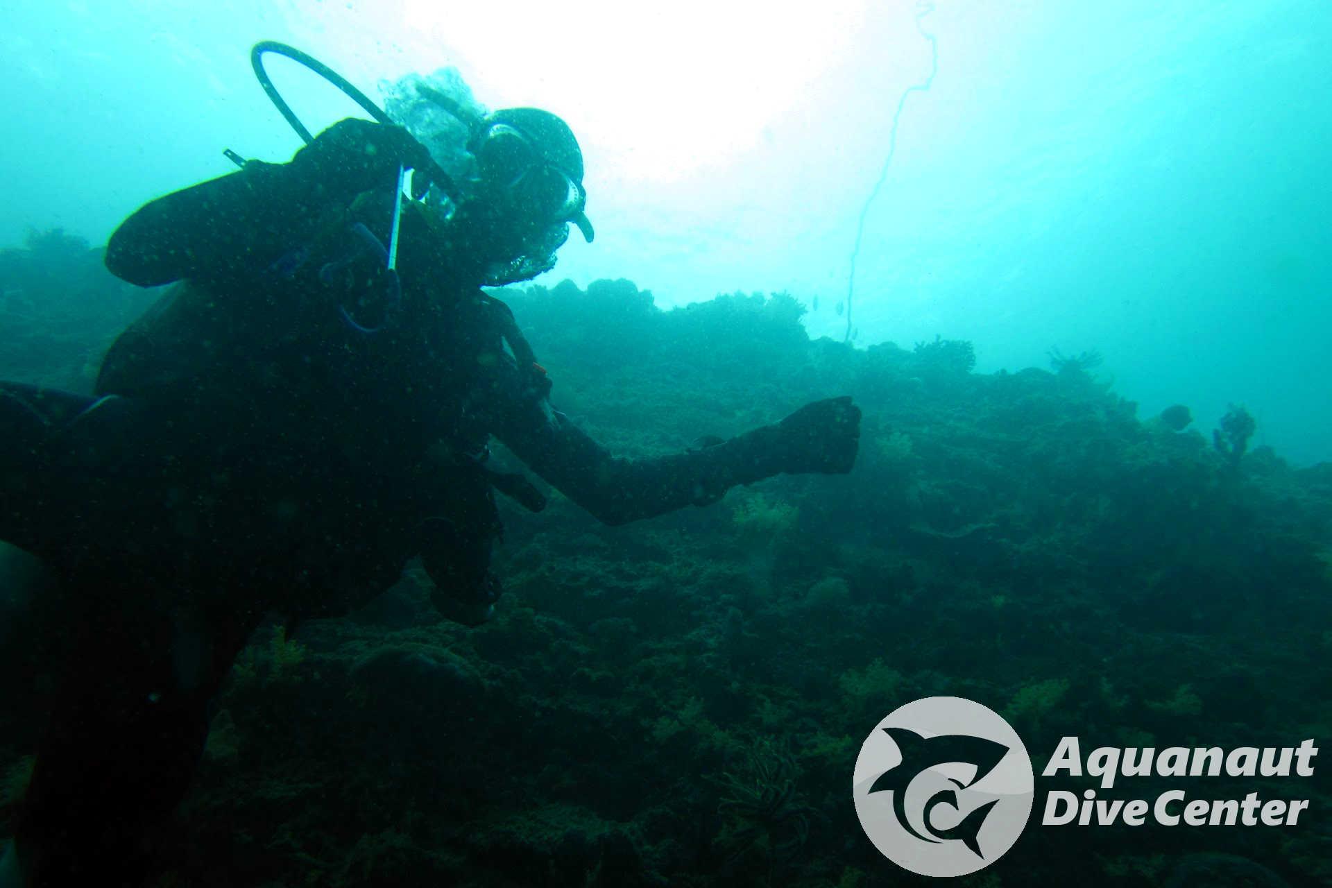 Deep dive in West Entalula, El Nido