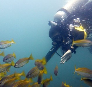 Solene diving into the yellow snapper school in South Miniloc, El Nido, Palawan.