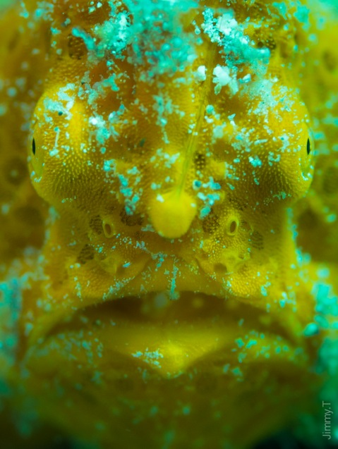 Jimmy Taieb, Frogfish in South Miniloc, El Nido, Philippines