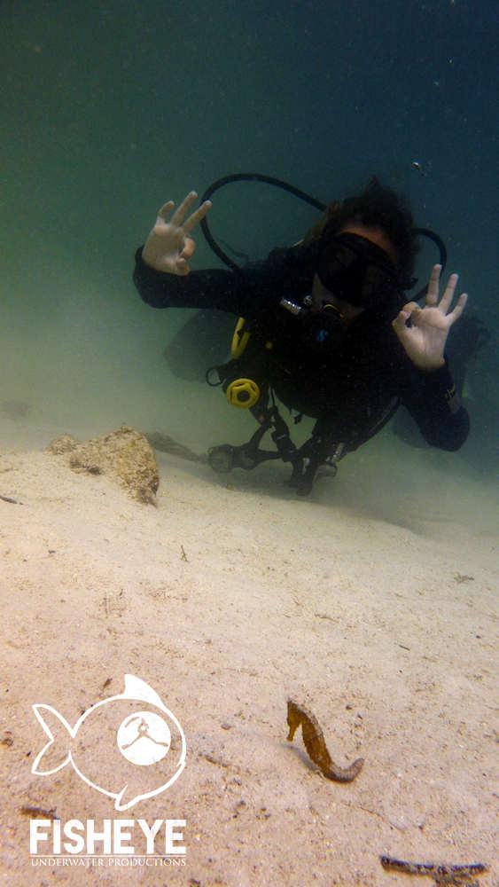 El Nido Seahorse Philippines Diver