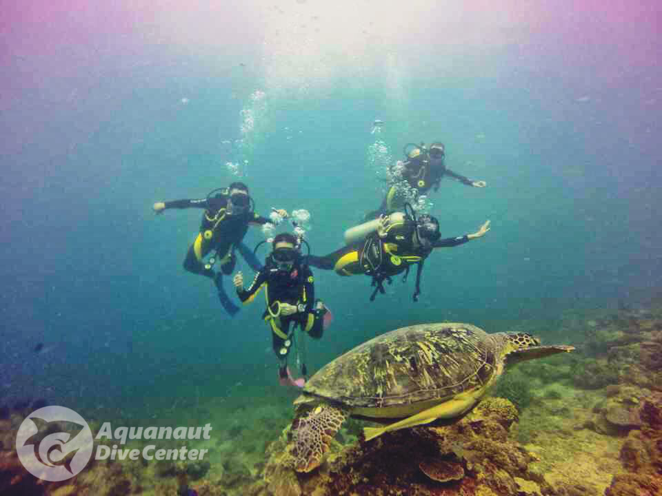 Dewy and friends Diving with a Green Sea Turtle in El Nido