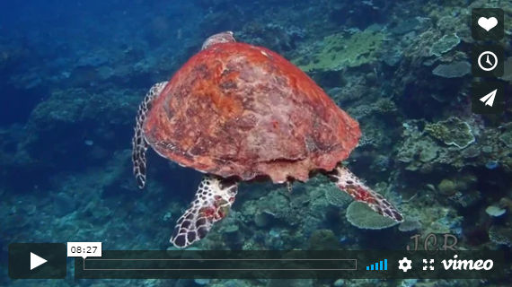 video scuba diving el nido dive sites jorgecr
